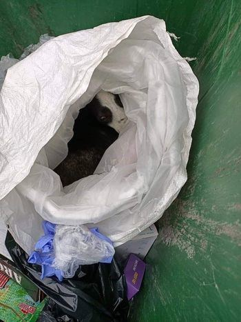 Rescatan a un perro arrojado dentro de una bolsa a un contenedor en Fuenlabrada
