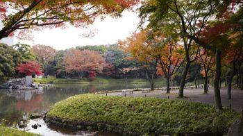 Lugares imprescindibles que visitar en Tokio durante el otoño