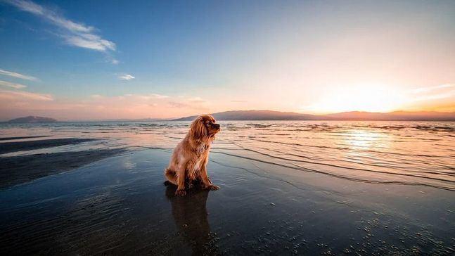 Los destinos más económicos con playa canina de España