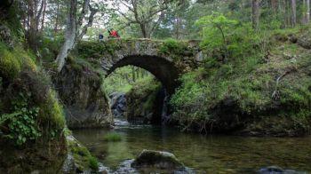 Demandan la expropiación del Pinar de los Belgas y su inclusión en el Parque Nacional de Guadarrama