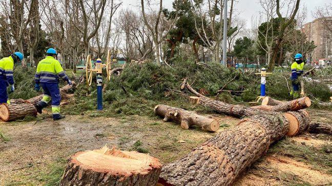 Móstoles revisa los árboles afectados por Filomena y pide precaución ante la alerta por viento