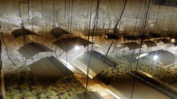 La Policía Municipal de Móstoles se incauta de más de 400 plantas de marihuana en el poblado de Las Sabinas