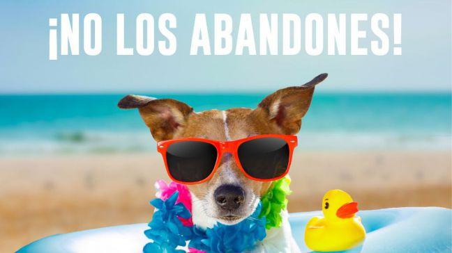 Móstoles lanza una campaña contra el abandono de mascotas en verano